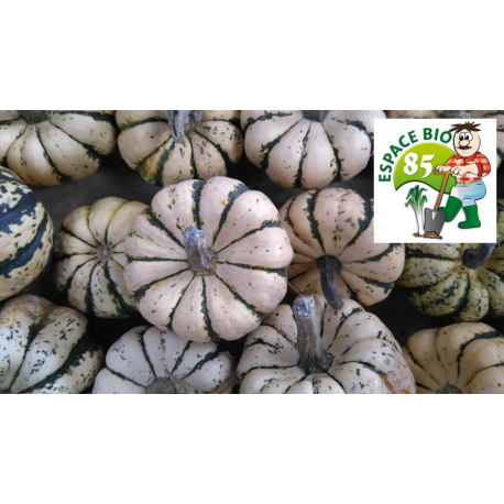Courge BUTTERNUT (kg)